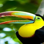 Citizen Science Reveals how bird's beaks Evolved