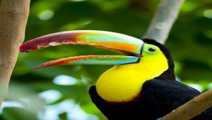 Citizen Science Reveals how bird's beaks Evolved