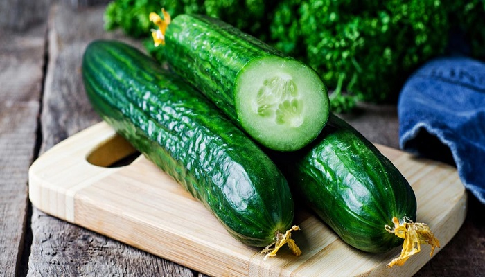 Business for Growing Cucumbers In Greenhouses