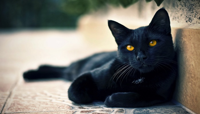 5 False Myths About Cats