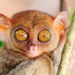 25 animals with big eyes