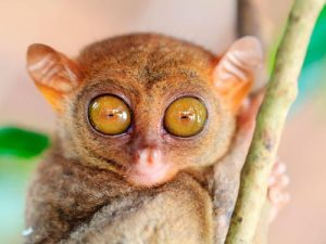 animals with big eyes