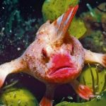 The rarest fish in the world