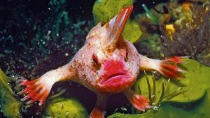 rarest fish in the world